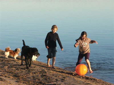 kids and dogs on the beach